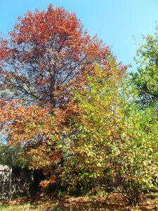 Musim gugur penuh warna