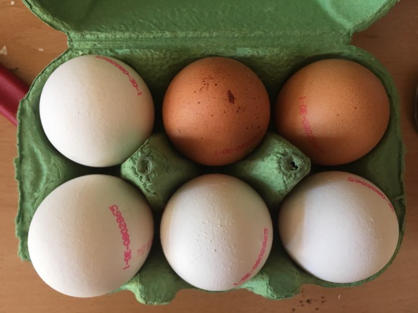 Telur bule di Jerman